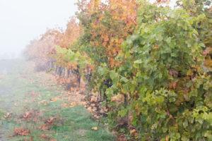 Photo Walk: Fall Colors at the Vineyard!